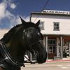 Carriage Horse in Julian California