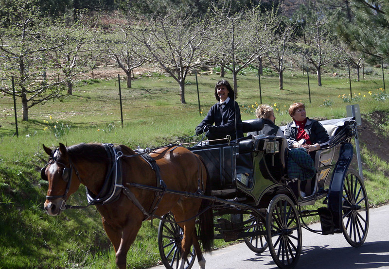 Carriage Ride in Early Spring
