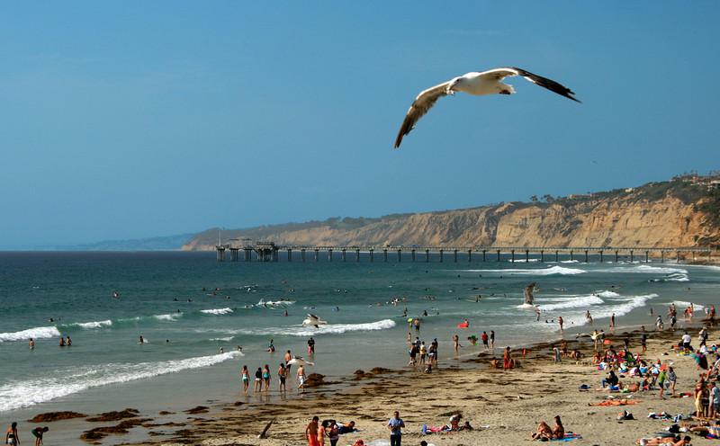 La Jolla Shores, Scipps Pier with Sea Gull