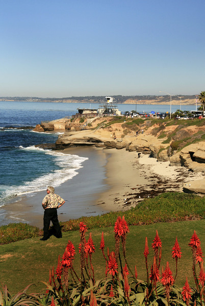La Jolla, View on Beach with Winter Blooms