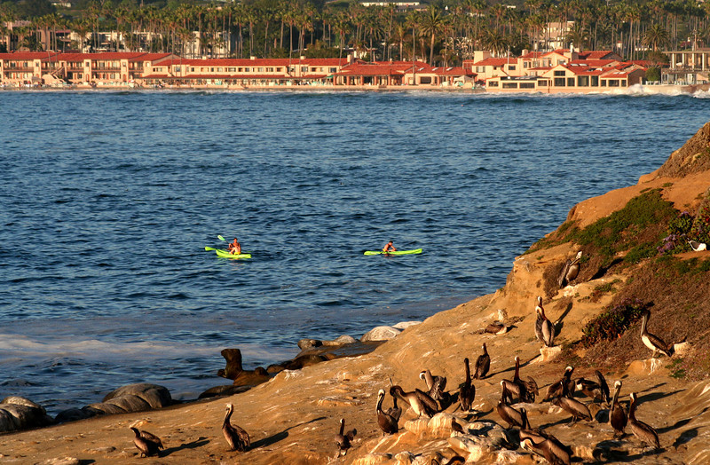 La Jolla, View on Beach & Tennis Club with Pelicans, Kayaks