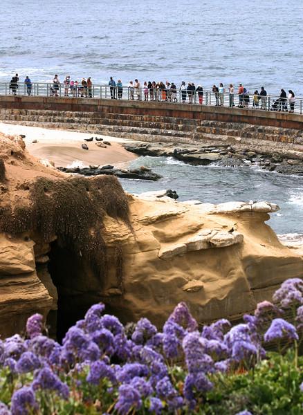 La Jolla, Seal Rock and Visitors