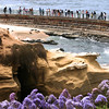 La Jolla, Seal Rock and Visitors