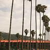 La Jolla Shores, Kids and Palms