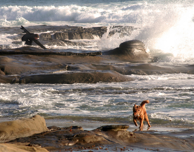 La Jolla, Surfer and Dog in Waves