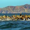 Midriff Islands, Gulf of California, Sea Lion Colony
