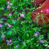Las Animas Wilderness Lodge, Purple Desert Flowers on Nature Trail