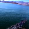 Midriff Islands, Gulf of California, Whale Shark in Bay