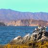 Midriff Islands, Baja California,  Blue Footed Booby Birds