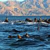Snorkeler Adventure with Sea Lions