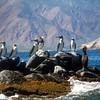 Midriff Islands, Gulf of California, Blue Footed Boobies, Mountain Backdrop