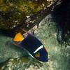 Galapagos Islands, Reef Fish, Bartolome