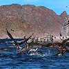 Bahía de Loreto National Park