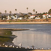 Mission Bay, Sunset View on Homes and Birds