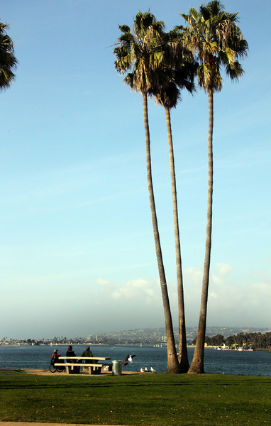 Mission Bay, View with Palms