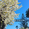 San Diego California, Kensington Neighborhood in Spring Bloom
