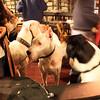 North Park, Ritual Tavern Dog-Friendly Patio