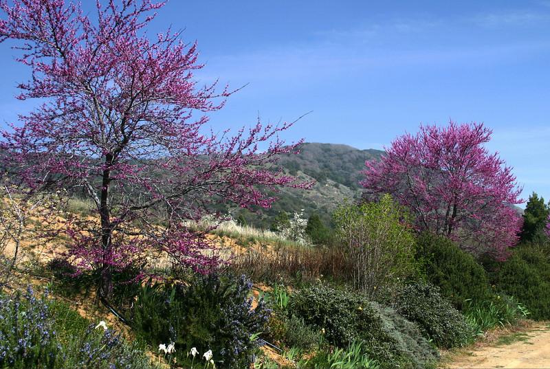 Spring Flowers, Julian Backcountry