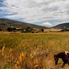 Horseback Rider, Cuyamaca Mountain Trail