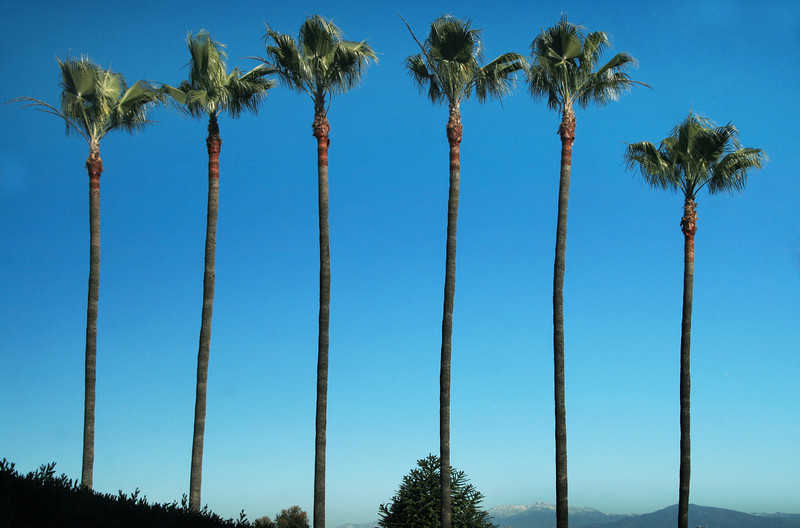 Palms, View on Cuyamaca Mountains