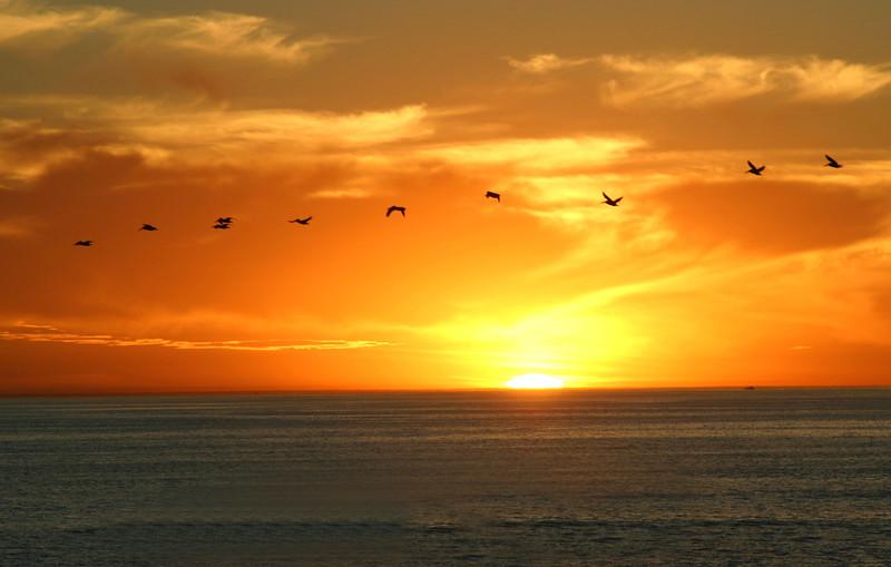 San Diego, Birds Sunset