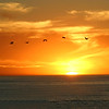 San Diego, Birds Sunset