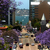 San Diego Downtown, Jacaranda Trees in bloom