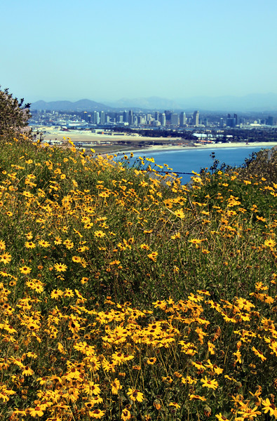 San Diego Skyline, View from Pt  Loma in Spring