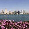 San Diego Skyline, View from Coronado in Spring