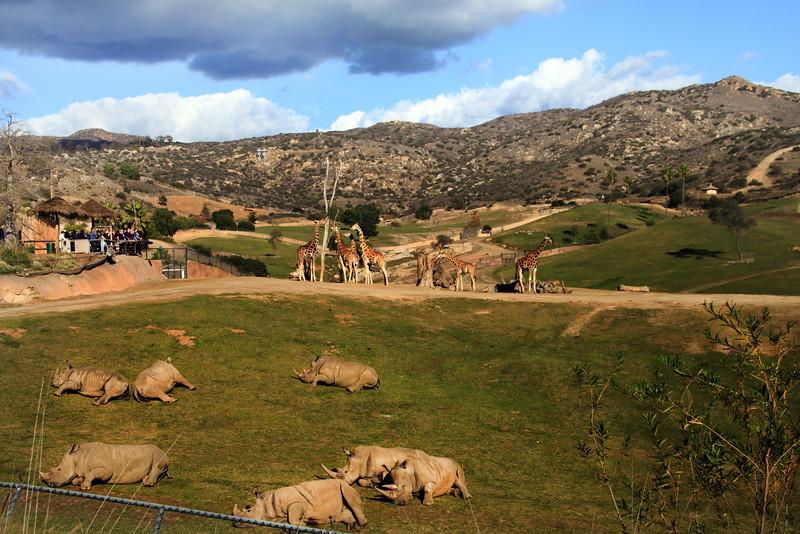San Diego Zoo Safari Park, View on Rhinos