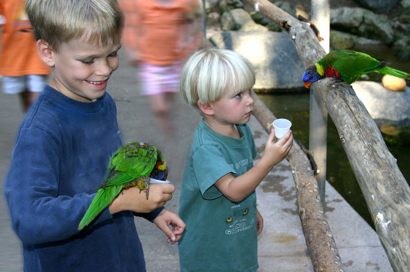 San Diego Zoo Safari Park, Boys with Lorikeets