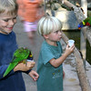 San Diego Zoo Safari Park, Boys with Lorikeets