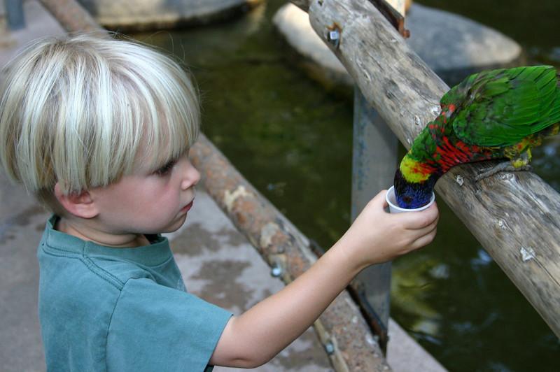San Diego Zoo Safari Park, Feeding Lorikeets