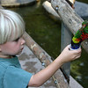 San Diego Zoo Safari Park, Feeding Lorikeets