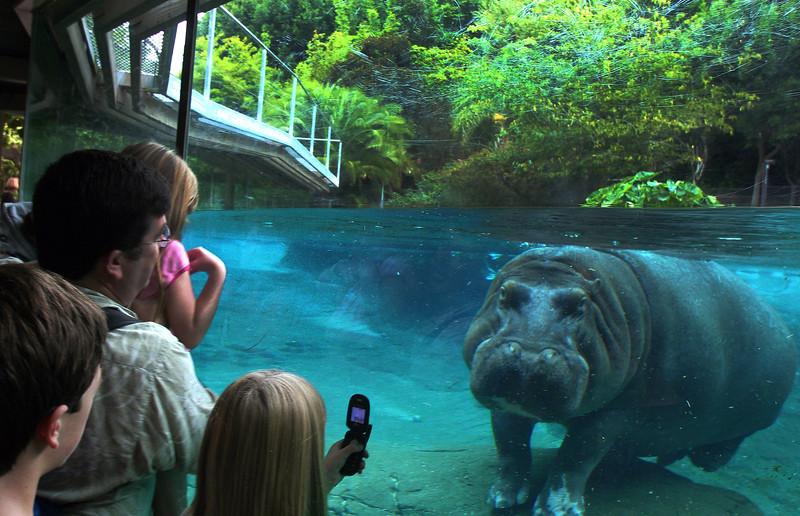 San Diego Zoo, Hippo Encounter