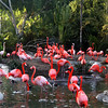 San Diego Zoo, Flamingo Pond