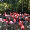 San Diego Zoo, Flamingo Pond