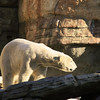 San Diego Zoo, Polar Bear