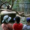 San Diego Zoo, Children in Panda Exhibit