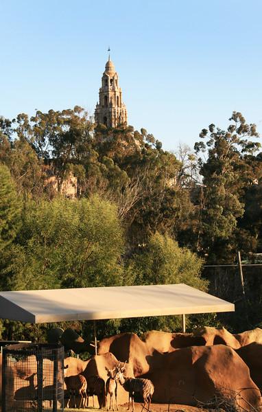 San Diego Zoo, View on Balboa Tower