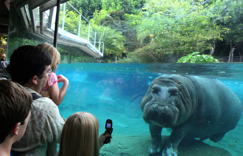 San Diego Zoo, Hippo Encounter