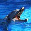 SeaWorld San Diego Smiling Dolphin