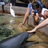 SeaWorld San Diego Dolphin Petting Pool