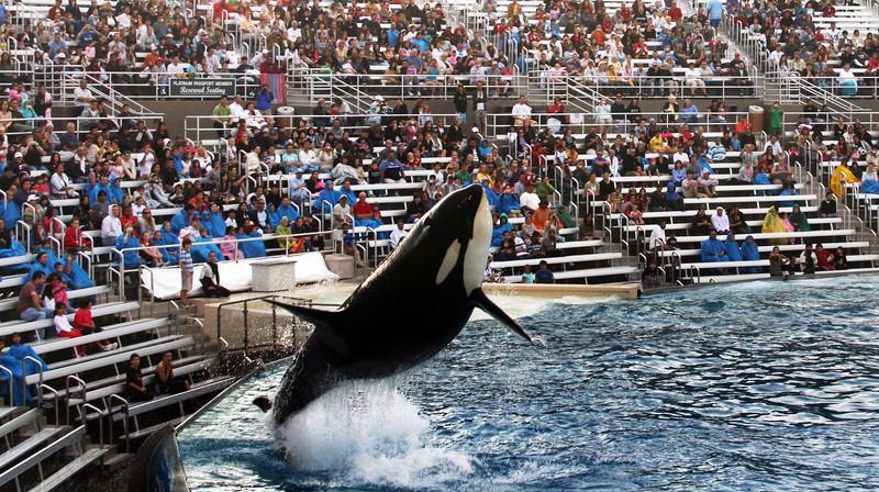 SeaWorld San Diego Shamu Leaping