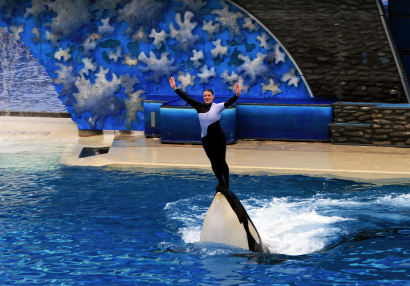 SeaWorld San Diego Shamu and Trainer