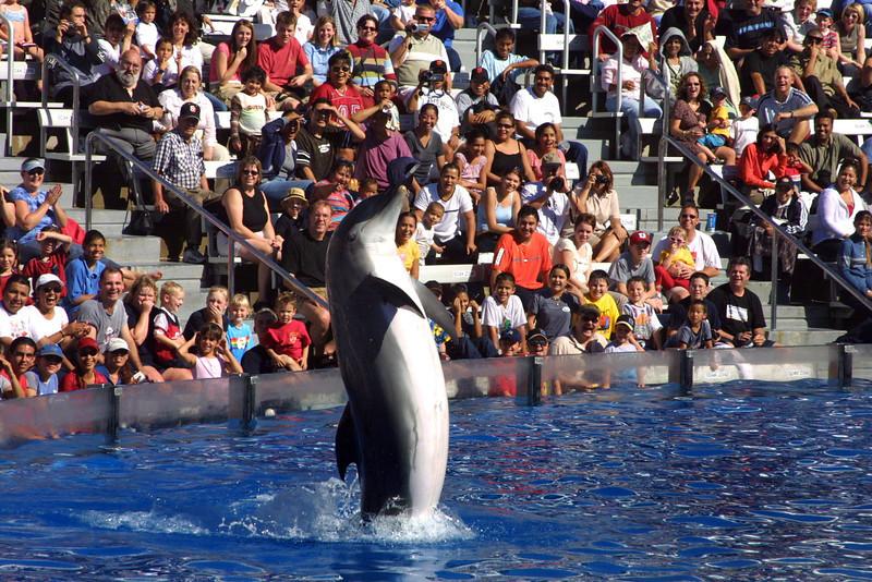 SeaWorld San Diego Dolphin