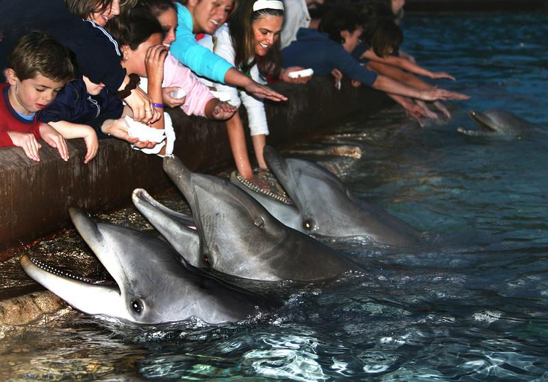 SeaWorld San Diego Dolphin Feeding Pool