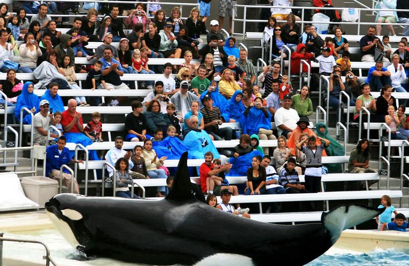 SeaWorld San Diego Shamu Posing