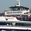 whale watching, San Diego, Harbor Excursions