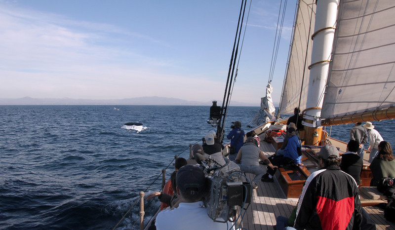 Whale Flukes from The America Yacht Whalewatching Adventure